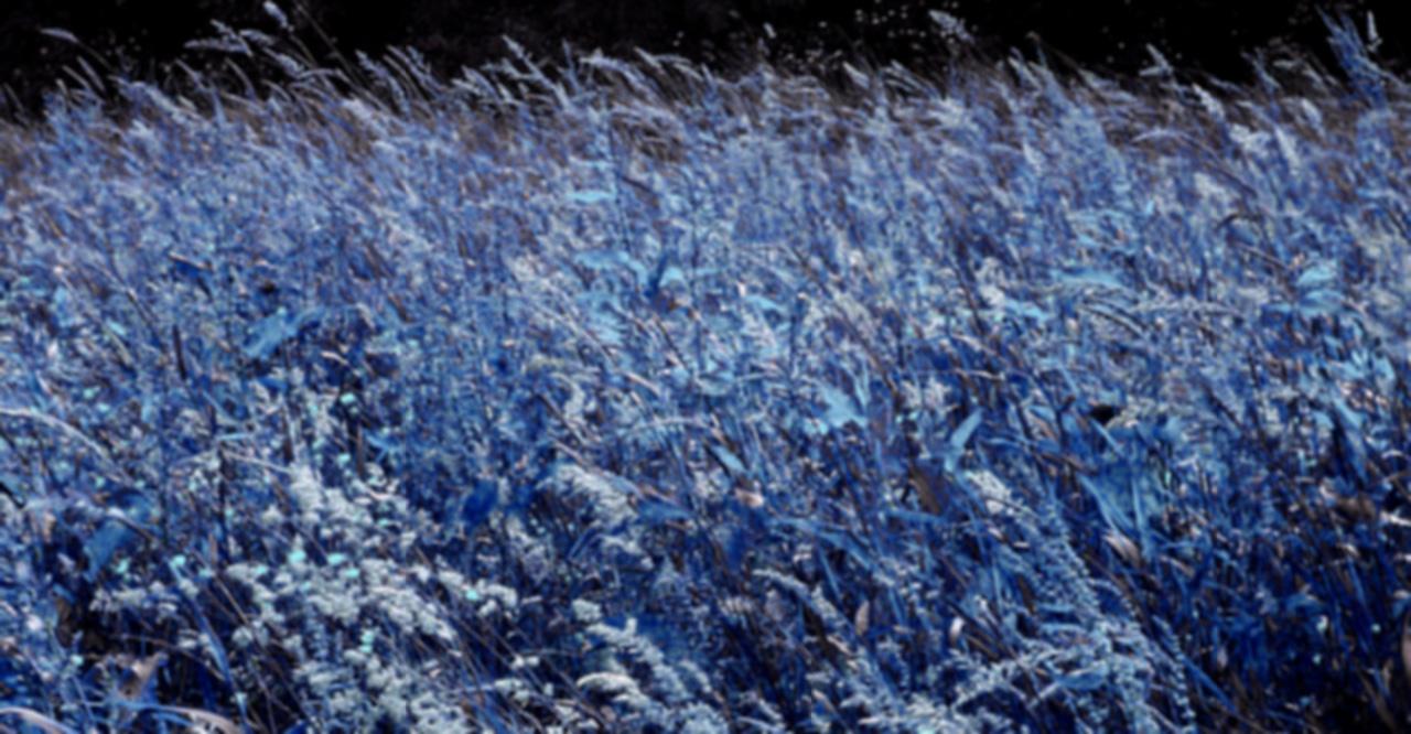 grass blurered